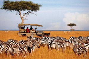 Keňa - to nejlepší: Africké safari zájezd Keňa stádo žiraf