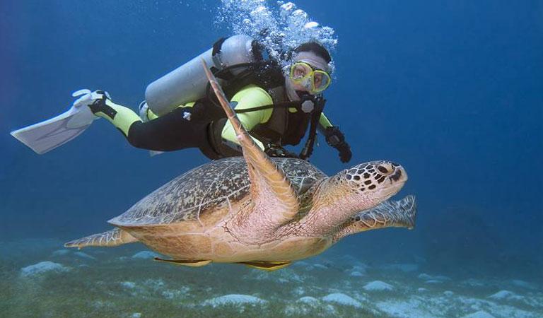 Filipíny Palawan Island želvy